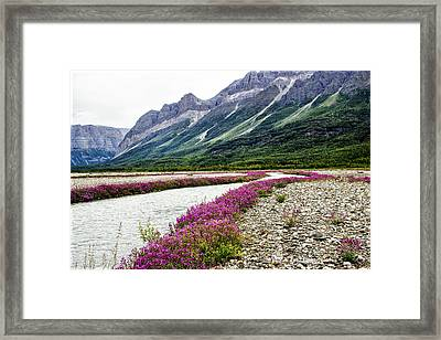 River Beauties Framed Print