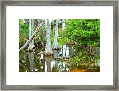 River Bend Lake Framed Print by Carey Chen