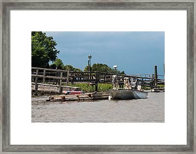 River Dogs Framed Print