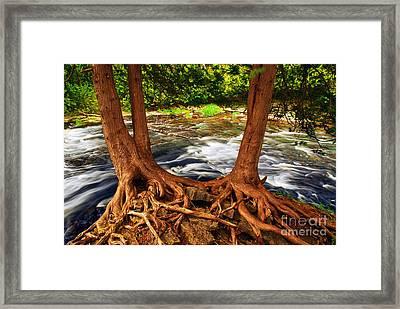 River Framed Print by Elena Elisseeva