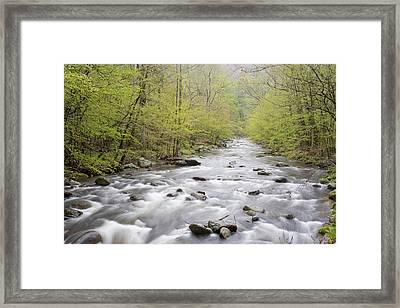 River Flowing Through A Forest, Middle Framed Print by Panoramic Images