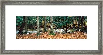 River Flowing Through A Forest, White Framed Print by Panoramic Images