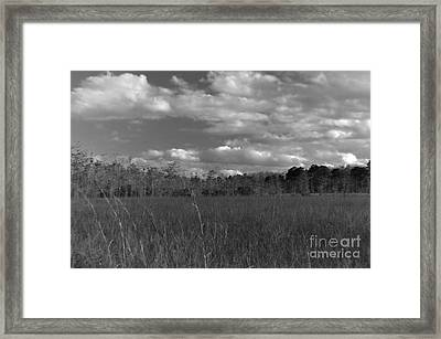 River Of Grass Framed Print by Andres LaBrada