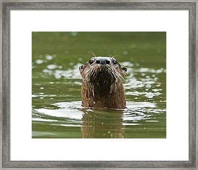 River Otter 1 Framed Print