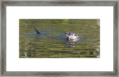 River Otter Framed Print by Julie Cameron