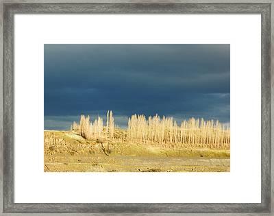 River Poplars Framed Print
