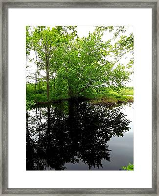 River Reflections Framed Print by Dancingfire Brenda Morrell