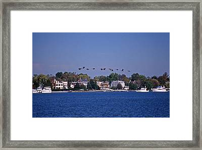 Riverfront Geese Framed Print by Skip Willits