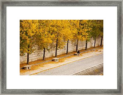 Riverfront, Ile De La Cite, Paris Framed Print by Panoramic Images