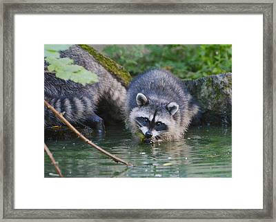Rivers Edge 2 Framed Print by Fraida Gutovich