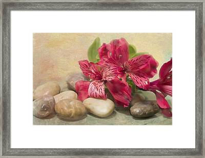 Rivers Rocks With Lily Of The Niles Framed Print