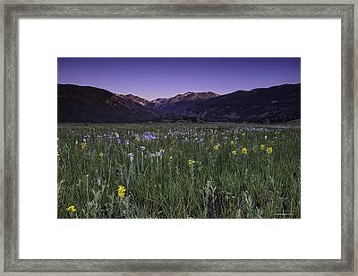 Rmnp Moraine Park Flora Sunrise Framed Print by Tom Wilbert