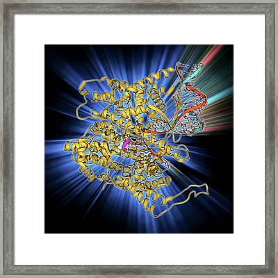 Rna Polymerase Molecule Framed Print by Laguna Design