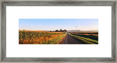 Road Along Rural Cornfield, Illinois Framed Print by Panoramic Images