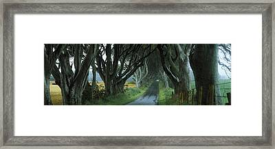 Road At The Dark Hedges, Armoy, County Framed Print by Panoramic Images