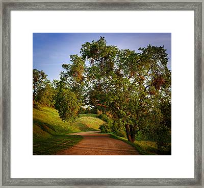 Road By The Tree Framed Print by Sarit Sotangkur