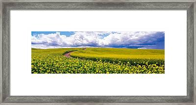 Road, Canola Field, Washington State Framed Print