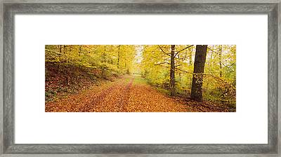 Road Covered With Autumnal Leaves Framed Print by Panoramic Images