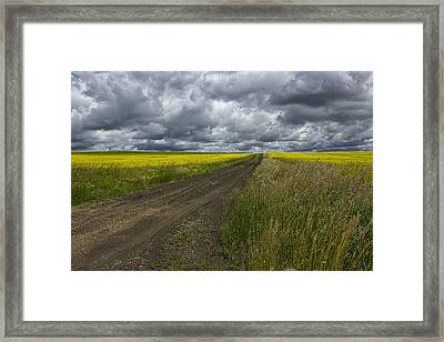 Road Going Through A Canola Field In Southern Alberta Framed Print by Randall Nyhof