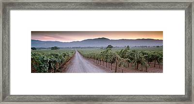 Road In A Vineyard, Napa Valley Framed Print