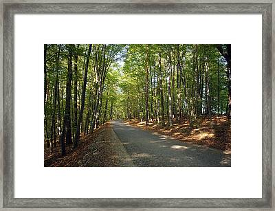 Road In Forest  Framed Print by Ioan Panaite
