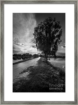 Road Into The Light-bw Framed Print