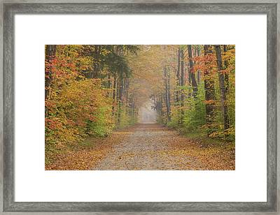 Road Passing Though Forest In Autumn Framed Print by Panoramic Images