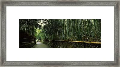 Road Passing Through A Bamboo Forest Framed Print