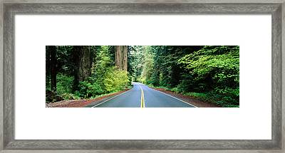 Road Passing Through A Forest, Prairie Framed Print