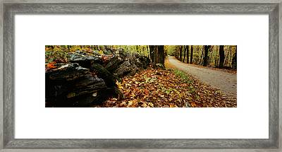 Road Passing Through A Forest, White Framed Print by Panoramic Images