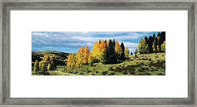 Road Passing Through Aspen Grove Framed Print
