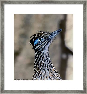 Framed Print featuring the photograph Road Runner by Elaine Malott