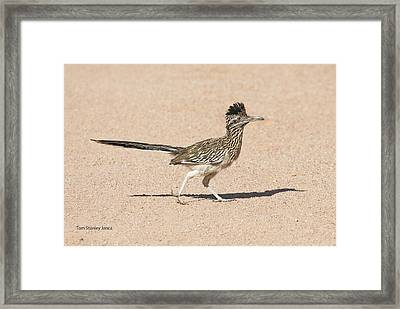 Framed Print featuring the photograph Road Runner On The Road by Tom Janca