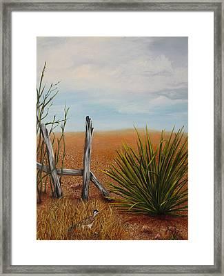 Road Runner Framed Print by Roseann Gilmore