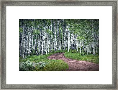 Road Through A Birch Tree Grove Framed Print