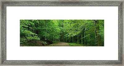 Road Through A Forest Near Kassel Framed Print by Panoramic Images