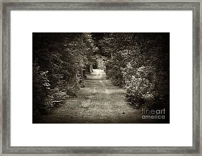 Road Through Forest Framed Print by Elena Elisseeva
