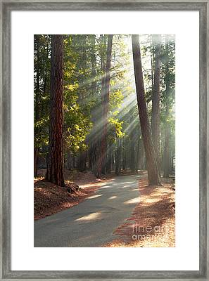 Road Through Mariposa Grove Framed Print