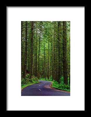 Designs Similar to Road Through The Woods