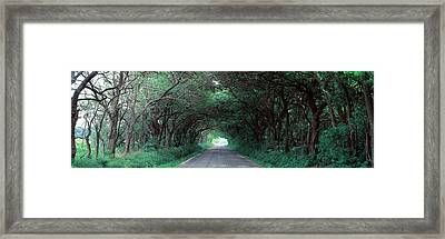 Road Through Trees Marion County Framed Print by Panoramic Images
