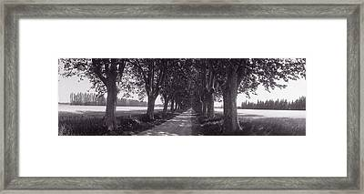Road Through Trees, Provence, France Framed Print by Panoramic Images
