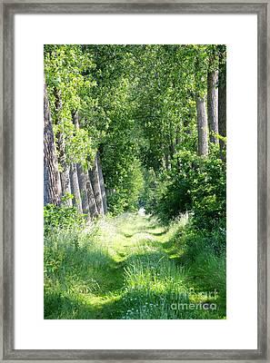 Road To Bruges Framed Print by Carol Groenen