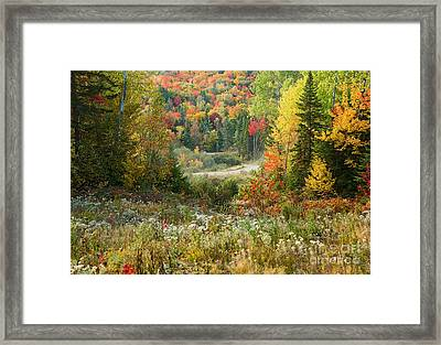 Road To Quill Hill Framed Print by Brenda Giasson