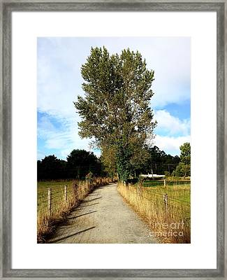 Road To Santiago Framed Print