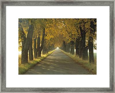 Road Wautumn Trees Sweden Framed Print