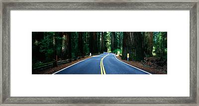Road Winding Through Redwood Forest Framed Print by Panoramic Images