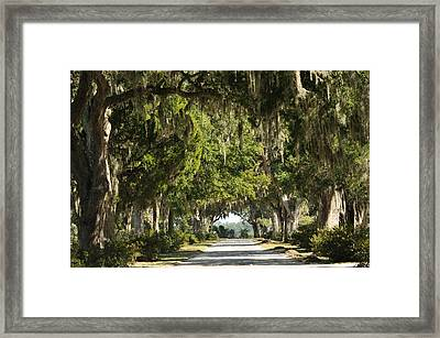Framed Print featuring the photograph Road With Live Oaks by Bradford Martin
