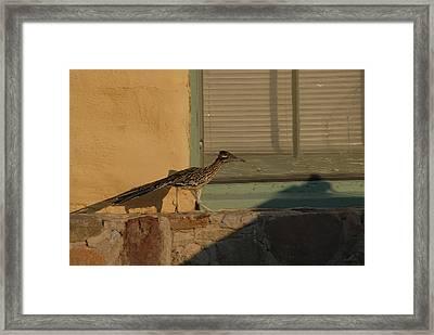 Roadrunner Framed Print