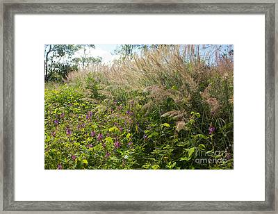 Framed Print featuring the photograph Roadside Blooms by Jose Oquendo