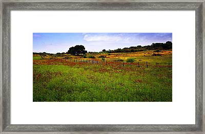 Roadside Flowers Framed Print by Tamyra Ayles